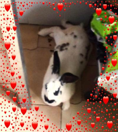 Coniglio Archivi - Made in Bunny O.d.V. 777c1b888811